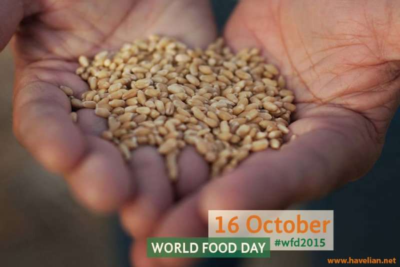 World Food Day 16 October 2015