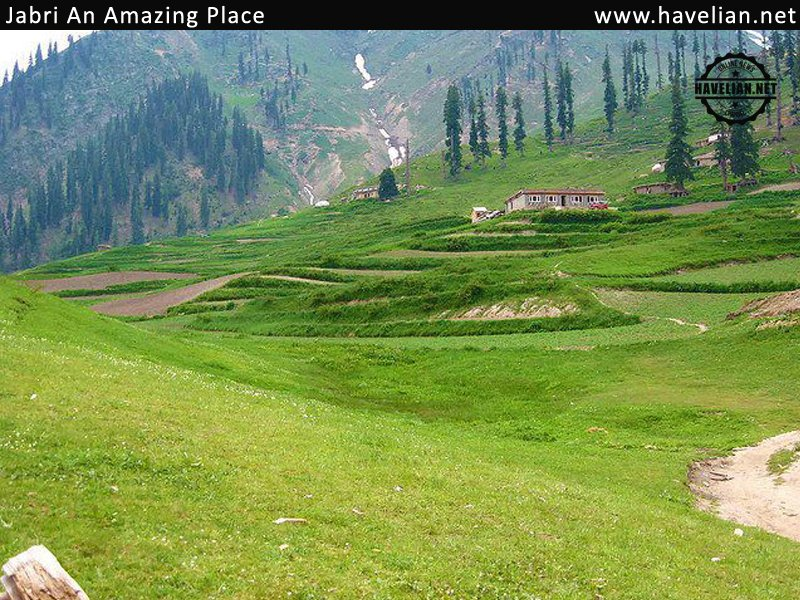 jabri, haripur, hazara, pakistan, fascinating, woods, water resources, villages, pictures, photos, natural beauty