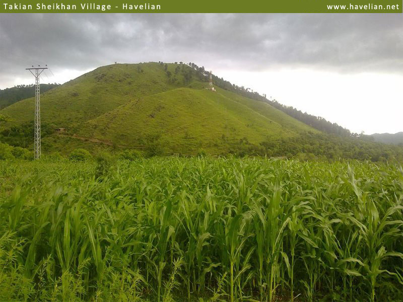 lush green fields of takian sheikhan