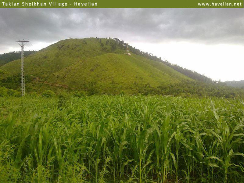 lush green fields of takian sheikhan